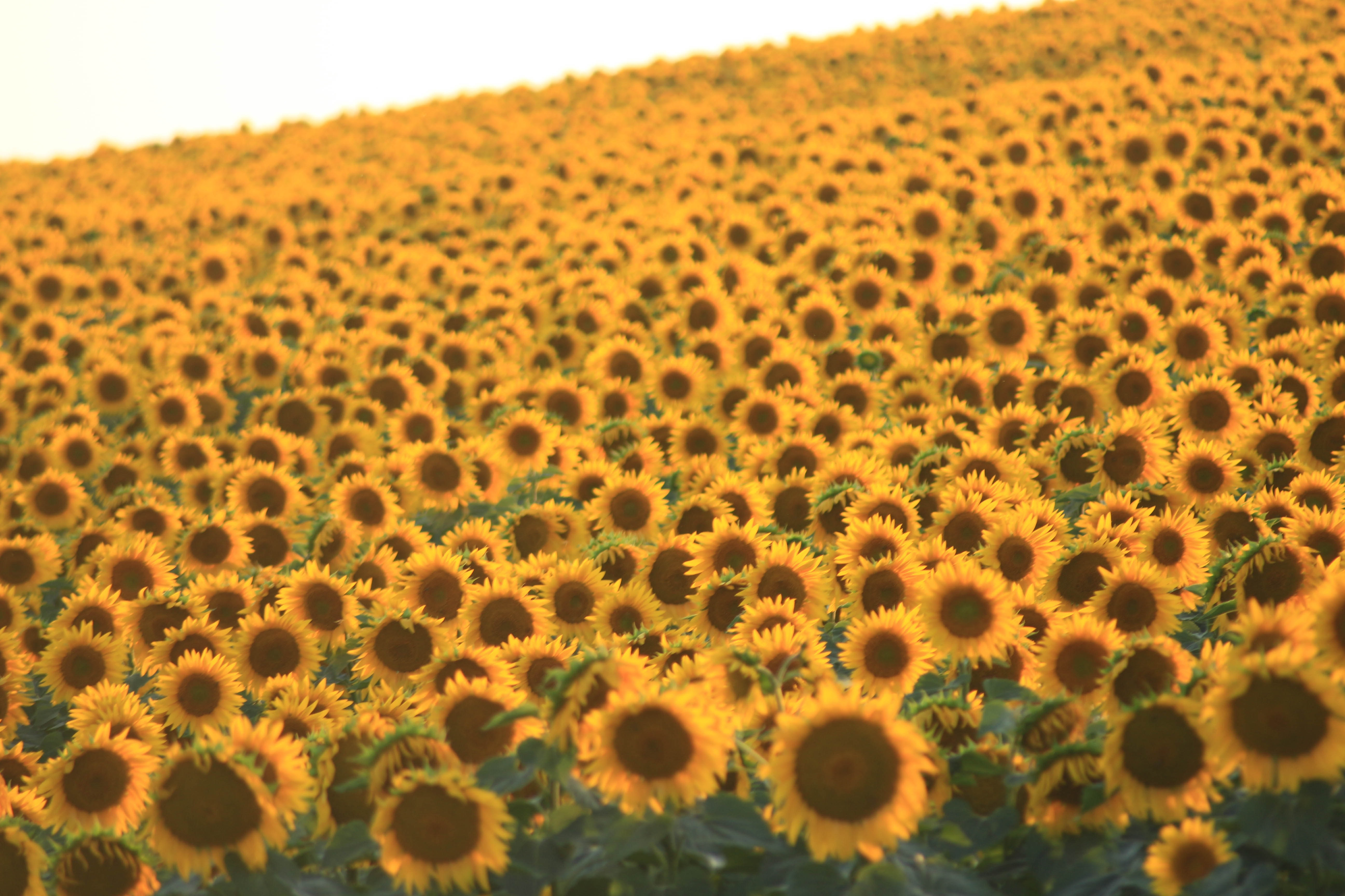 Budget Tekirdag Tours In Turkey